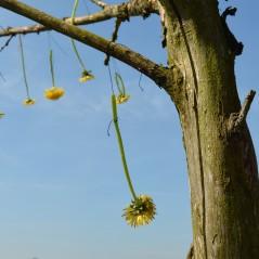 boombloemen